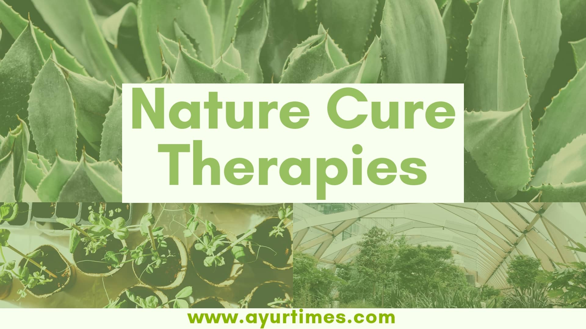 Photo of Nature Cure Therapies