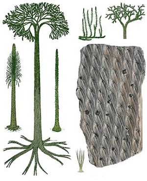 Lepidodendron The Fossil Plant Genus