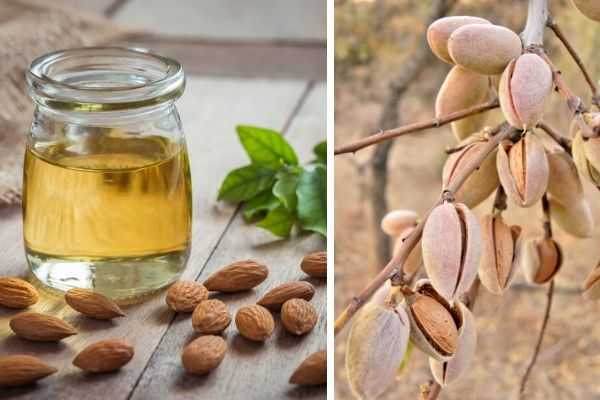 Almonds on Tree and Almond Oil