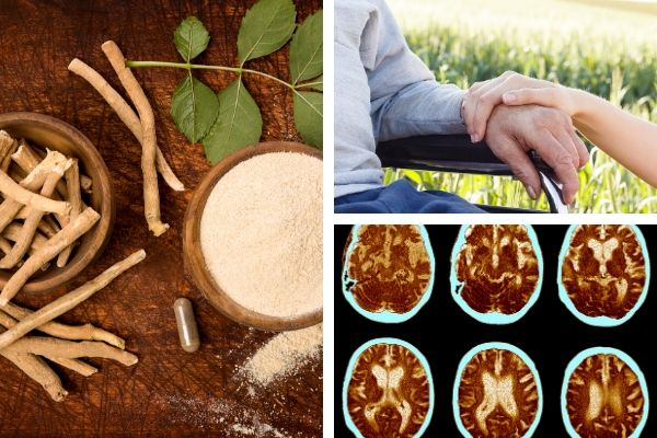 Alzheimer's Disease Herbal Treatment