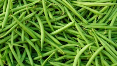 Photo of Green Beans Health Benefits & Side Effects