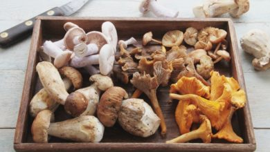 Photo of Health Benefits of Mushrooms