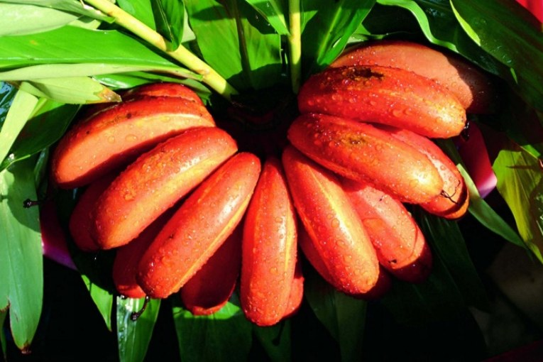 chyawanprash side effects