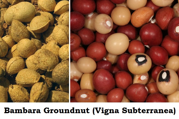 Photo of Bambara Groundnut