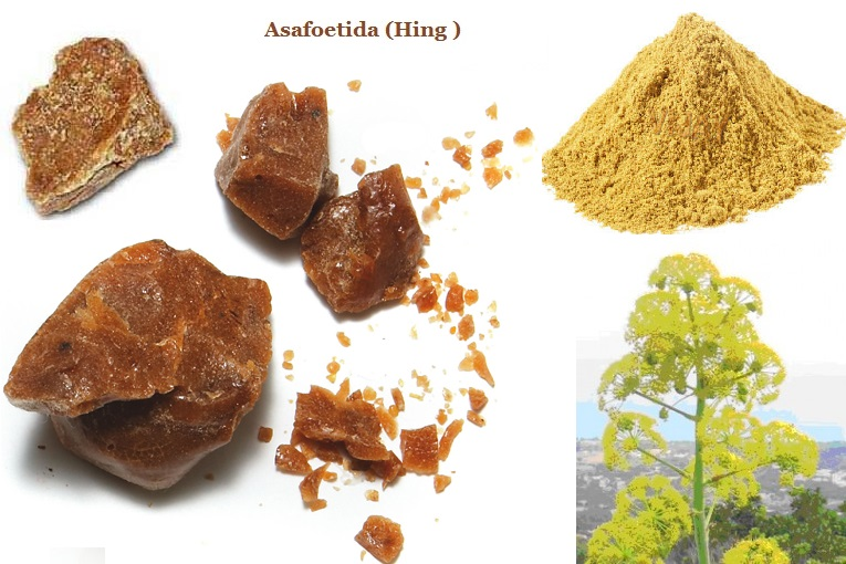 Asafoetida hing or ferula assa foetida benefits amp side
