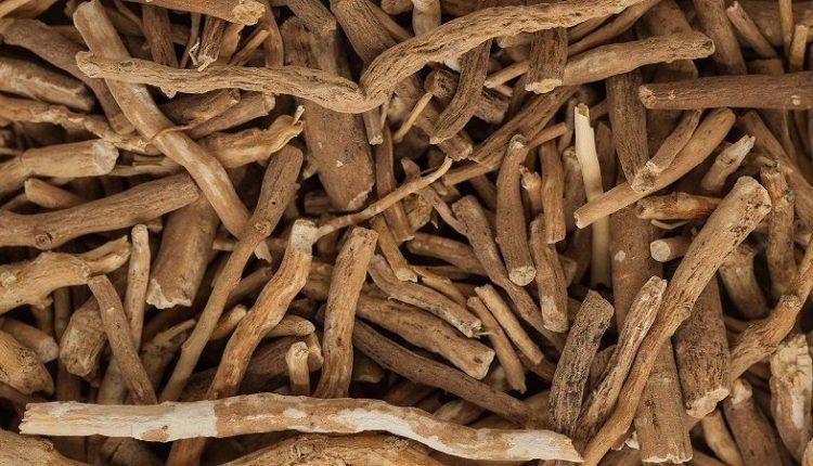 Ashwagandha (Withania Somnifera) Roots