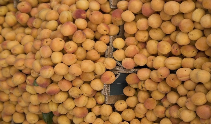 Photo of Apricot – Prunus Armeniaca (Jardalu, Khubani or Khumani)