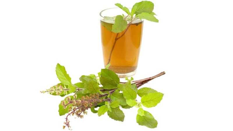 Holy Basil Tea - Tulsi Tea