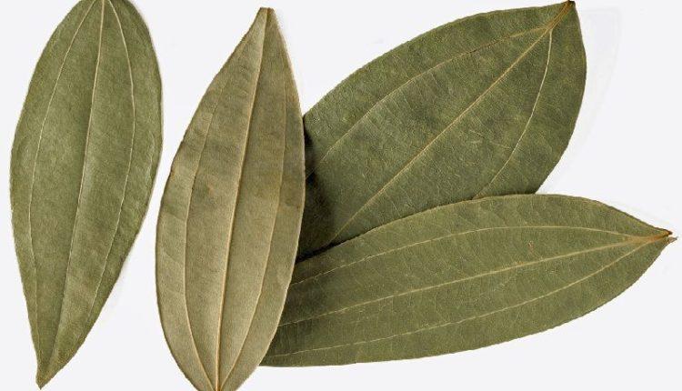 Indian Bay Leaf - Tejpata