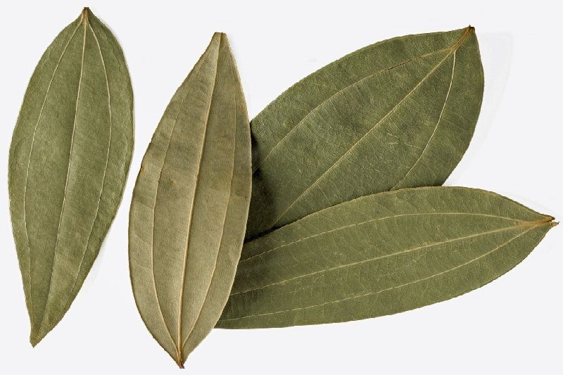 Photo of Tejpata (Indian Bay Leaf) – Cinnamomum Tamala
