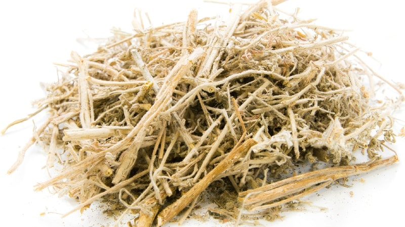 Dried Sweet Wormwood – Artemisia Annua