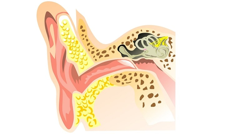 Photo of Home Remedies for Ear Infection