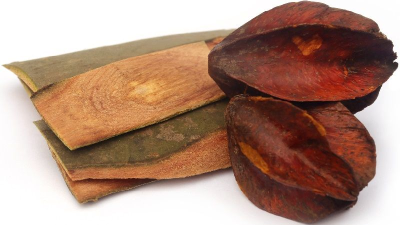 Terminalia Arjuna Bark and Dried Fruits