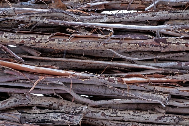 Willow Wood with Bark