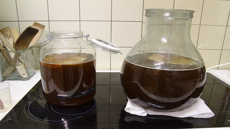 Kombucha Tea Preparation