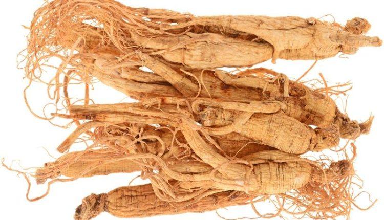 Panax Ginseng Roots