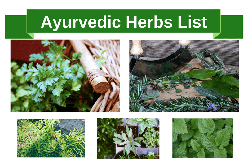 Ayurvedic Herbs List