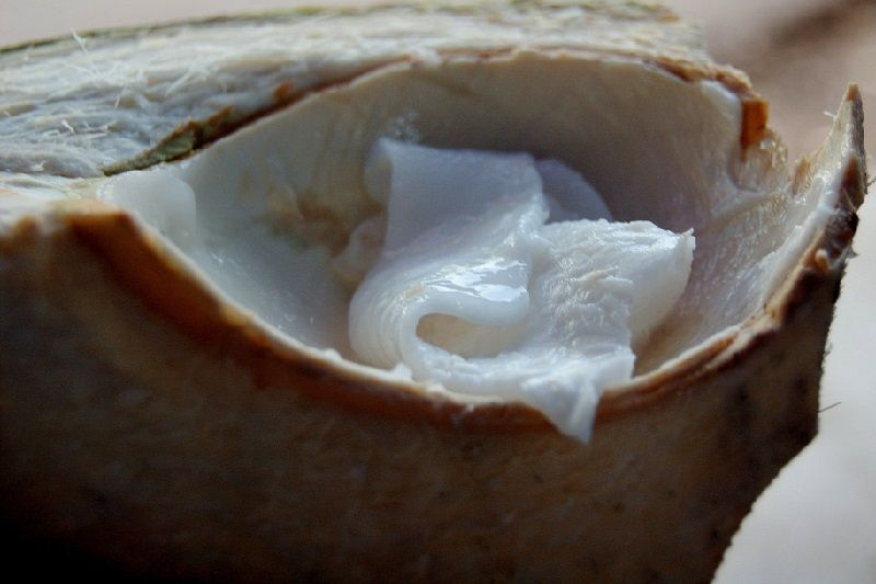 Photo of 9 Evidence Based Health Benefits of Raw Coconut Meat