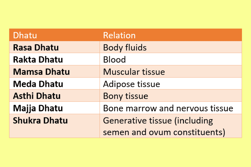 Photo of Sapta Dhatu in Ayurveda (Seven Types of Tissues)