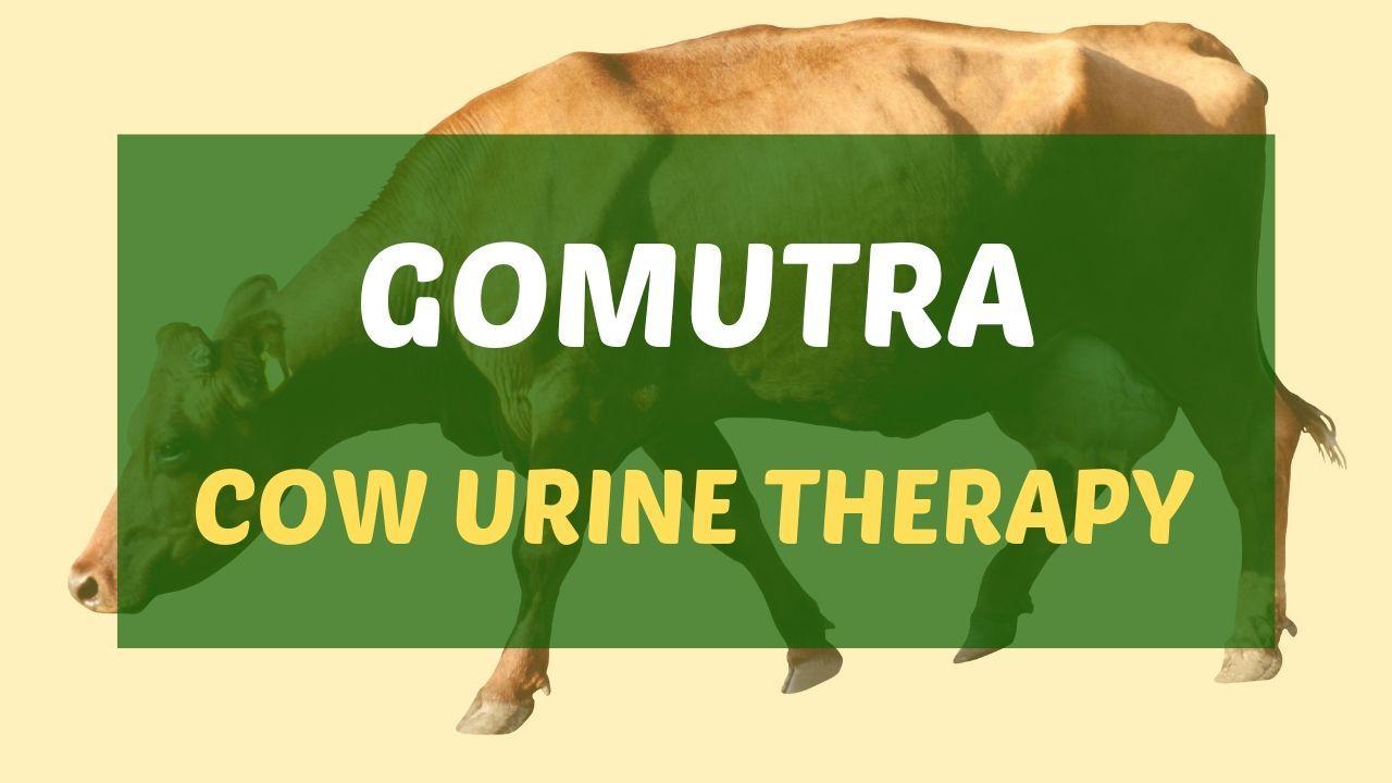 Gomutra (Cow Urine)