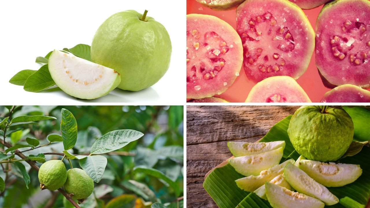 Photo of Guava: Evidence-Based Health Benefit
