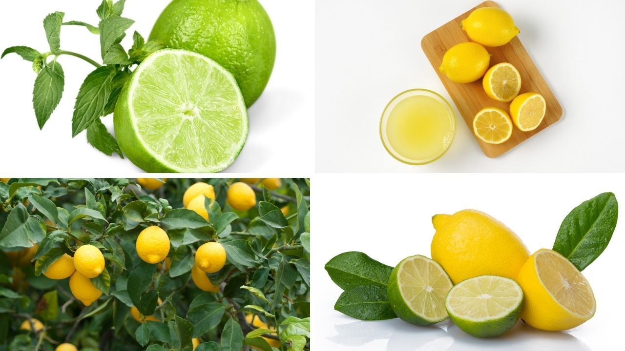 Photo of Lemon: Evidence-based Health Benefits