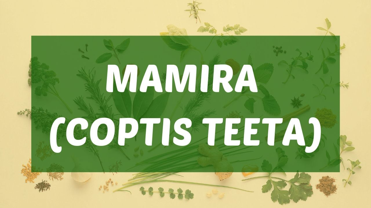 Photo of Mamira (Coptis Teeta) Indications, Dosage & Side Effects