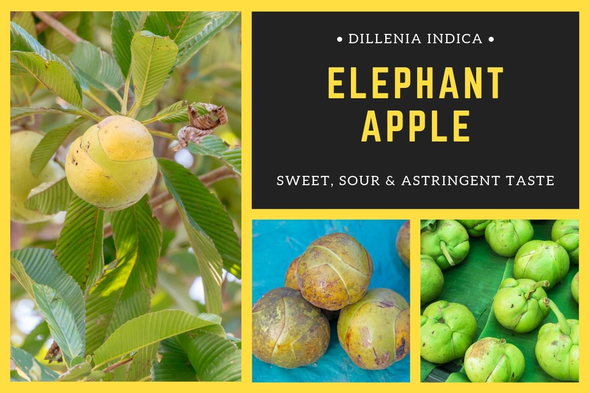 Photo of 3 Amazing Health Benefits of Elephant Apple
